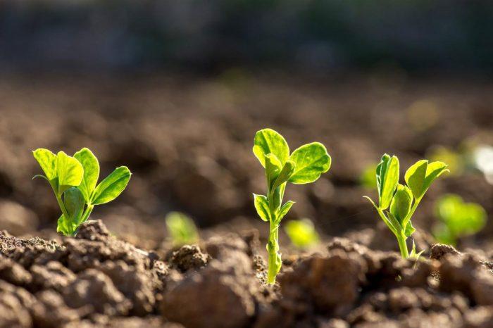Chúa đang chờ bạn gieo một hạt giống