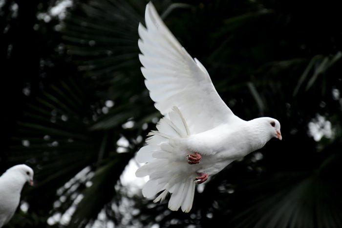 Bí quyết phát triển: hợp tác với Thánh Linh