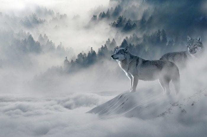 Con sói đầu đàn & Đấng mở đường